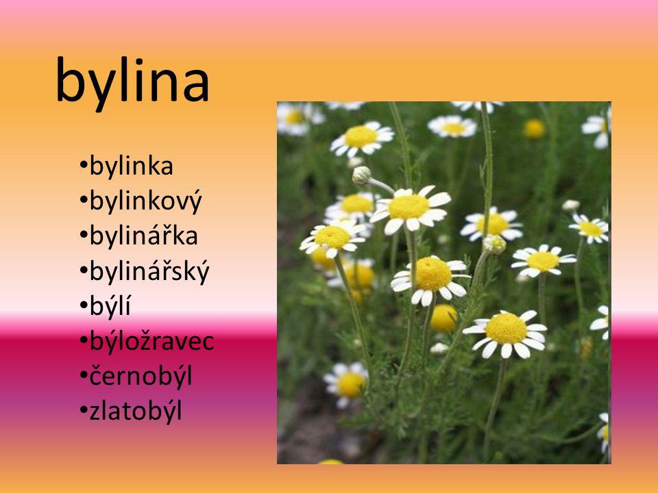 bylina bylinka bylinkový bylinářka bylinářský býlí býložravec černobýl zlatobýl