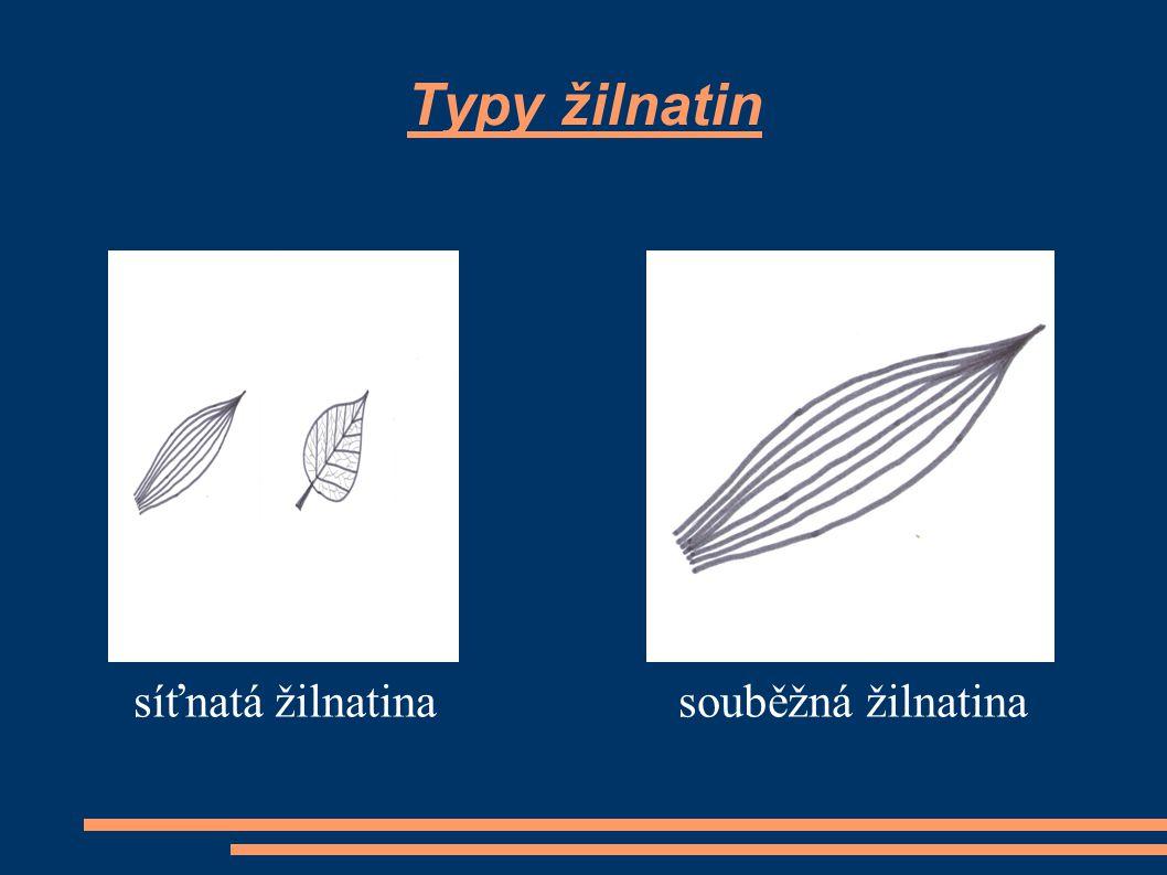 Rozdělení listů podle listové čepele list jednoduchý - listová čepel je tvořena jednou částí list složený - listová čepel je rozdělena na více částí