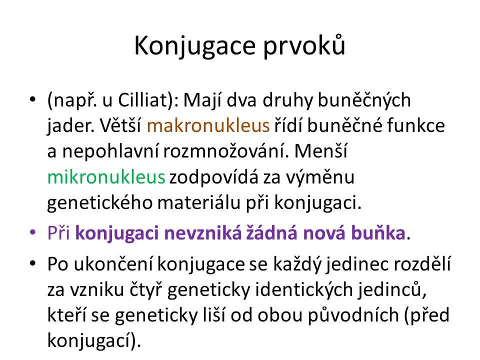 Konjugace prvoků (např.u Cilliat): Mají dva druhy buněčných jader.