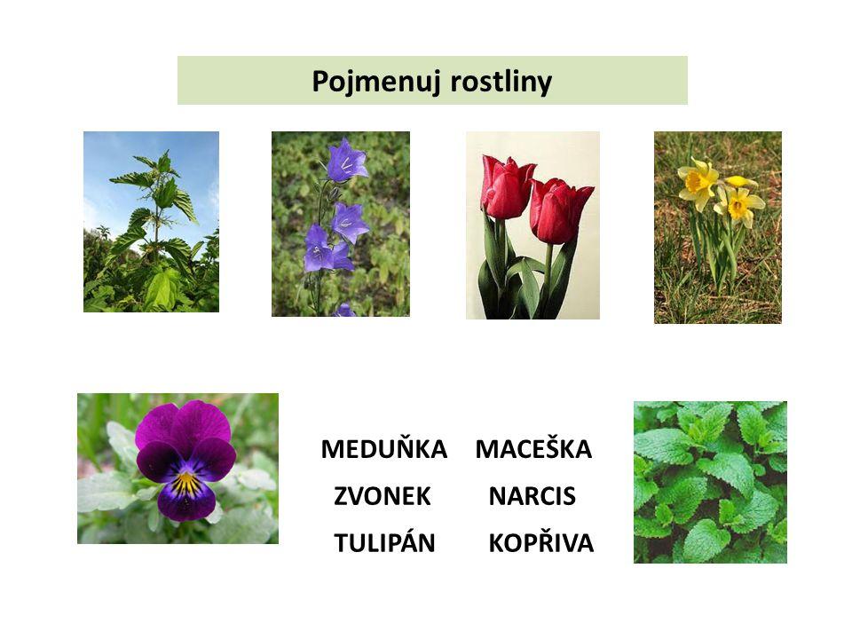 Pojmenuj rostliny ZVONEK TULIPÁN NARCIS MACEŠKAMEDUŇKA KOPŘIVA