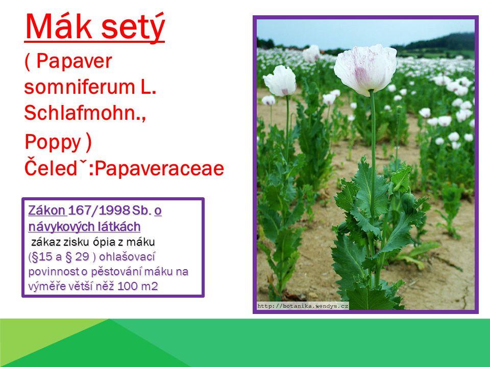 Mák setý ( Papaver somniferum L.Schlafmohn., Poppy ) Čeledˇ:Papaveraceae Zákon 167/1998 Sb.