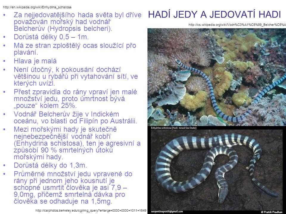 HADÍ JEDY A JEDOVATÍ HADI Za nejjedovatějšího hada světa byl dříve považován mořský had vodnář Belcherův (Hydropsis belcheri). Dorůstá délky 0,5 – 1m.