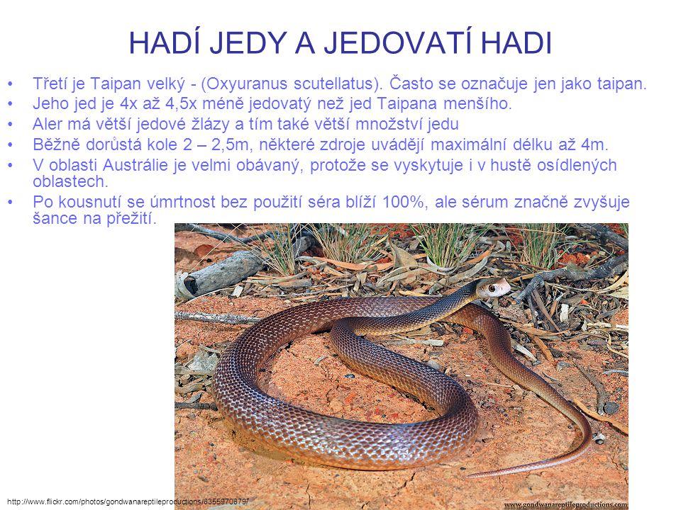 HADÍ JEDY A JEDOVATÍ HADI Třetí je Taipan velký - (Oxyuranus scutellatus). Často se označuje jen jako taipan. Jeho jed je 4x až 4,5x méně jedovatý než