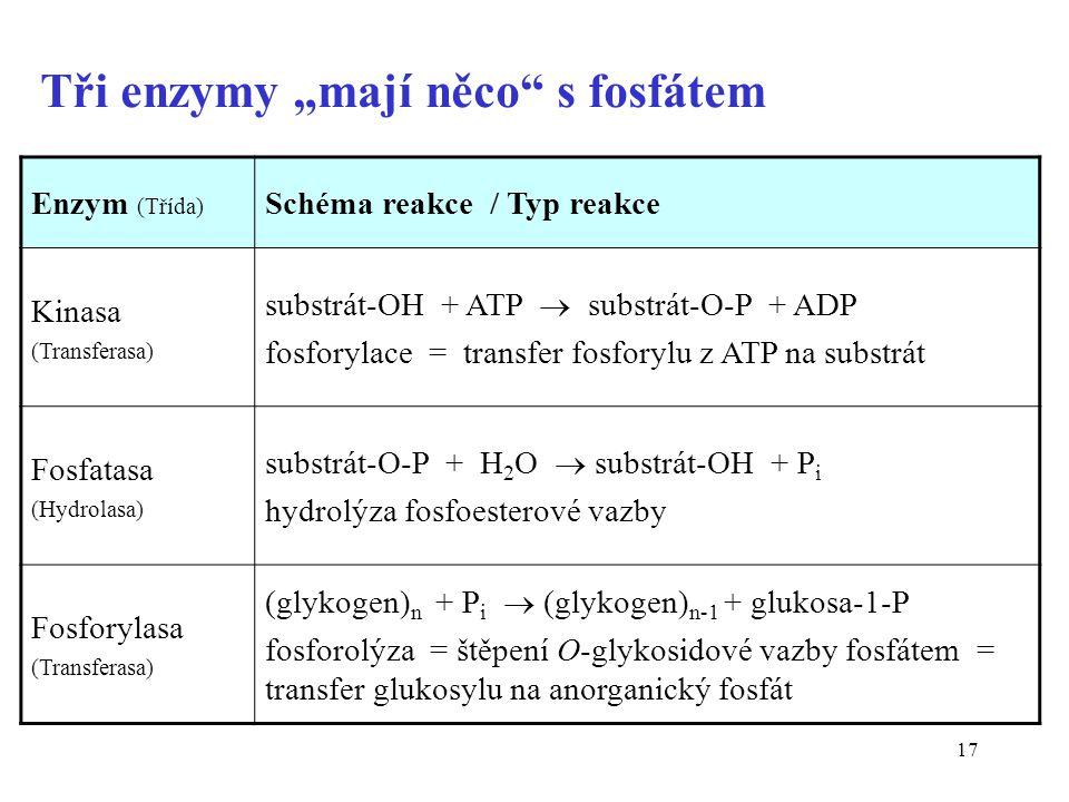 """17 Tři enzymy """"mají něco s fosfátem Enzym (Třída) Schéma reakce / Typ reakce Kinasa (Transferasa) substrát-OH + ATP  substrát-O-P + ADP fosforylace = transfer fosforylu z ATP na substrát Fosfatasa (Hydrolasa) substrát-O-P + H 2 O  substrát-OH + P i hydrolýza fosfoesterové vazby Fosforylasa (Transferasa) (glykogen) n + P i  (glykogen) n-1 + glukosa-1-P fosforolýza = štěpení O-glykosidové vazby fosfátem = transfer glukosylu na anorganický fosfát"""
