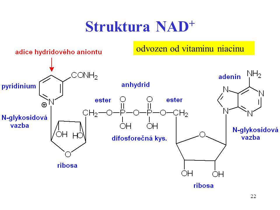 22 Struktura NAD + odvozen od vitaminu niacinu