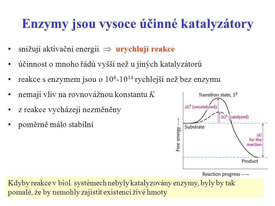 3 Enzymy jsou vysoce účinné katalyzátory snižují aktivační energii  urychlují reakce účinnost o mnoho řádů vyšší než u jiných katalyzátorů reakce s enzymem jsou o 10 6 -10 14 rychlejší než bez enzymu nemají vliv na rovnovážnou konstantu K z reakce vycházejí nezměněny poměrně málo stabilní Kdyby reakce v biol.