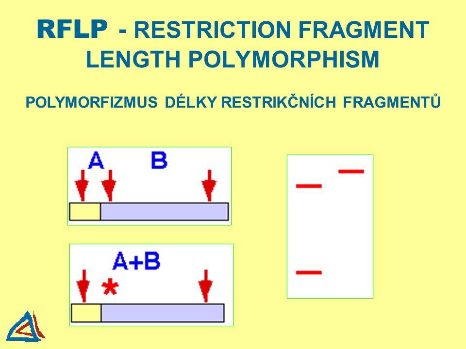 RFLP - RESTRICTION FRAGMENT LENGTH POLYMORPHISM POLYMORFIZMUS DÉLKY RESTRIKČNÍCH FRAGMENTŮ