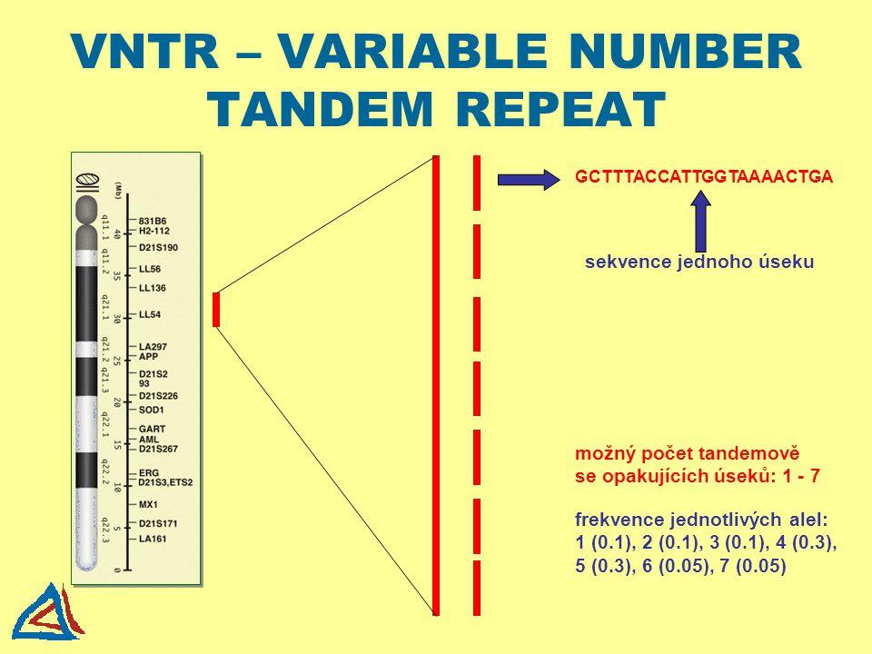 VNTR – VARIABLE NUMBER TANDEM REPEAT GCTTTACCATTGGTAAAACTGA sekvence jednoho úseku možný počet tandemově se opakujících úseků: 1 - 7 frekvence jednotl