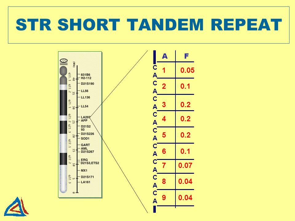 STR SHORT TANDEM REPEAT CACACACACACACACACACACACACACACACACACA 1 0.05 2 0.1 3 0.2 4 0.2 5 0.2 9 0.04 6 0.1 7 0.07 8 0.04 A F