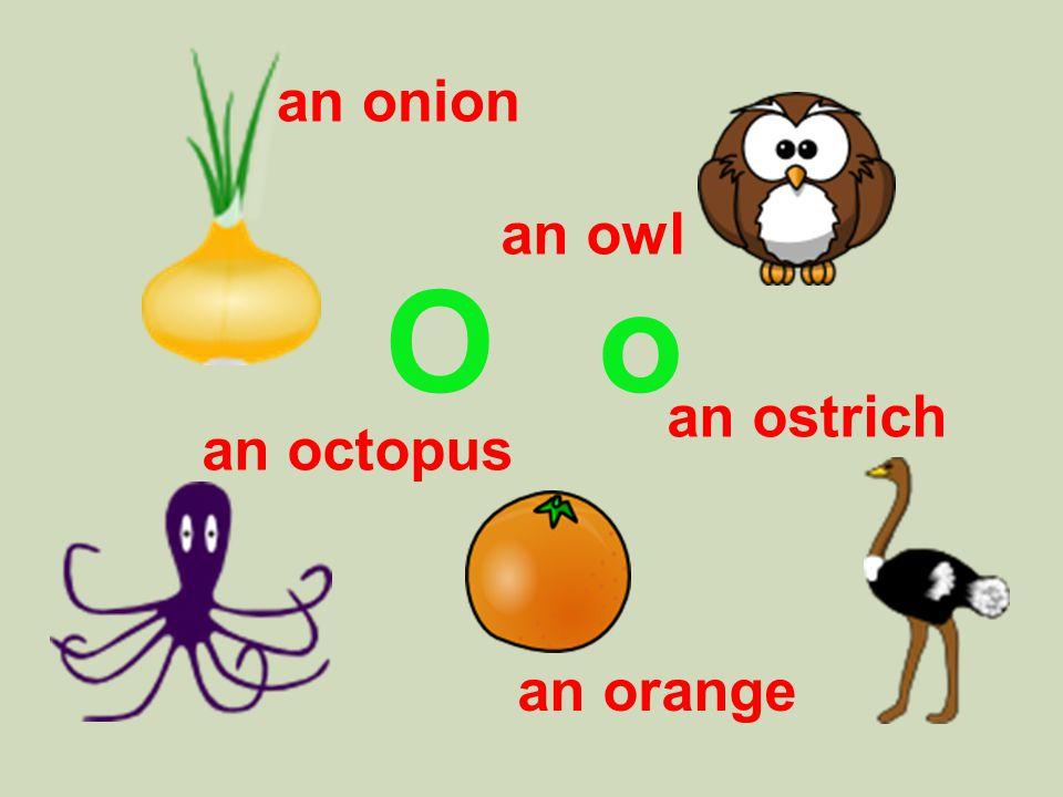 O o an onion an owl an ostrich an orange an octopus