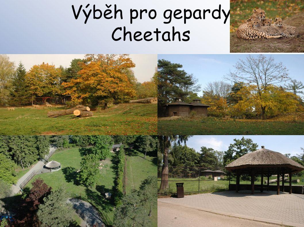 Výběh pro gepardy Cheetahs
