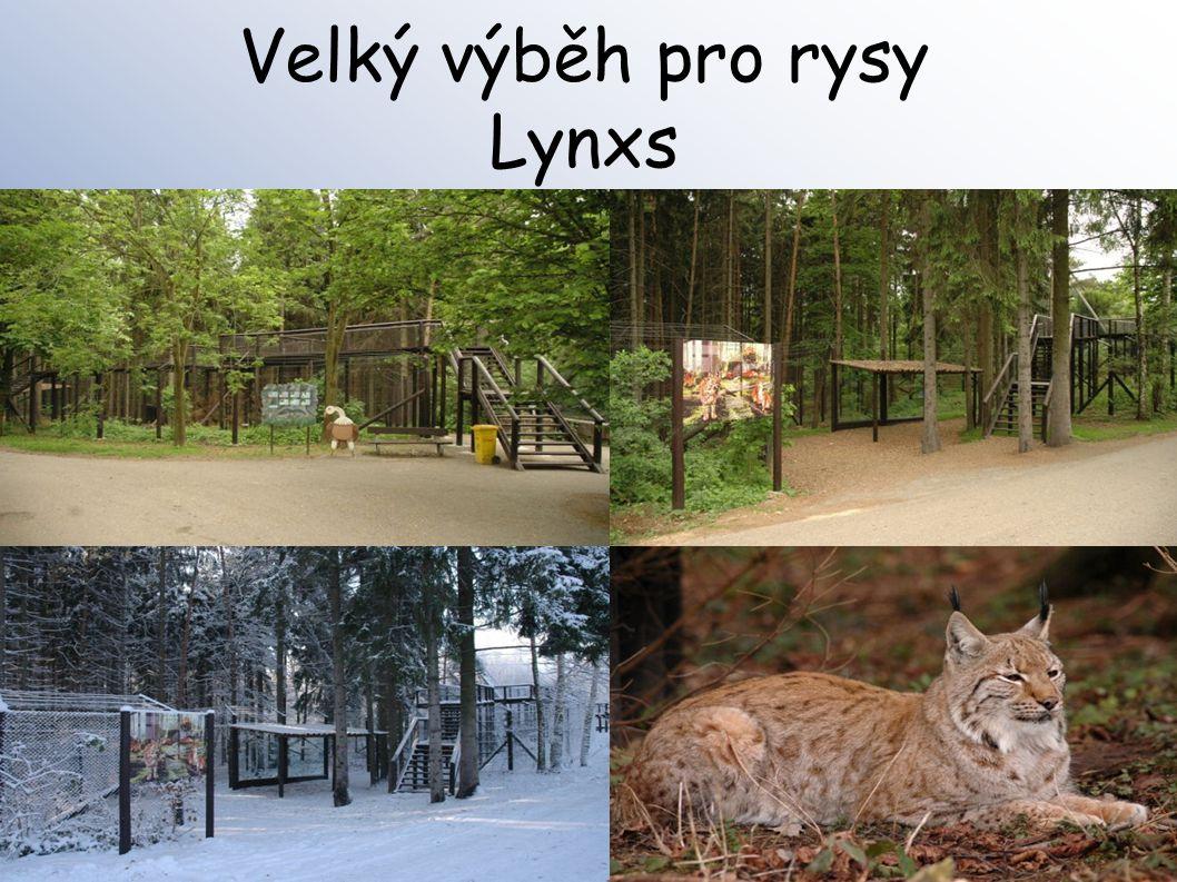 Velký výběh pro rysy Lynxs