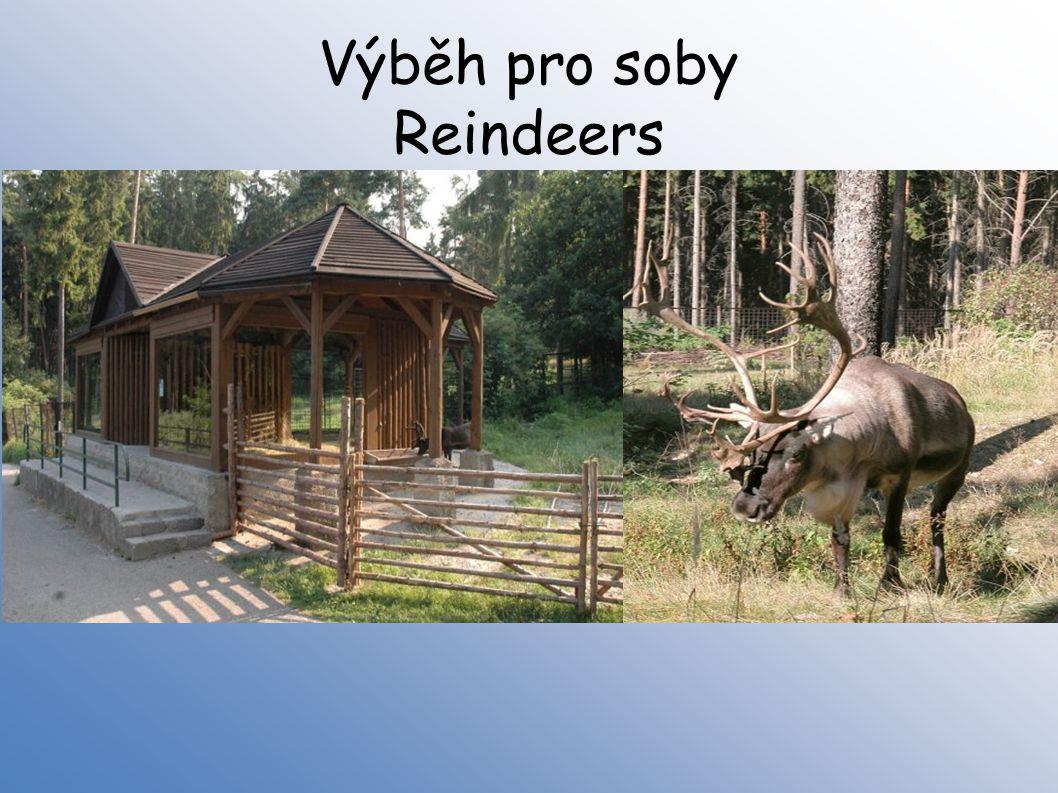 Výběh pro soby Reindeers