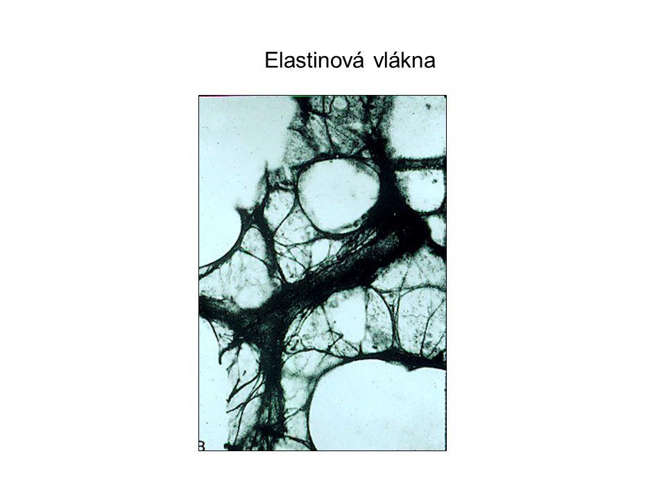 Perfect Lung Elastinová vlákna