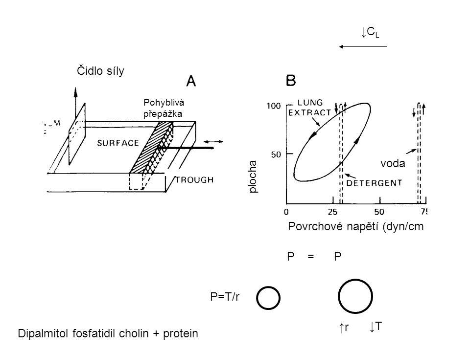 Čidlo síly Pohyblivá přepážka Povrchové napětí (dyn/cm plocha voda P=T/r ↑r ↓T P = P Dipalmitol fosfatidil cholin + protein ↓CL↓CL