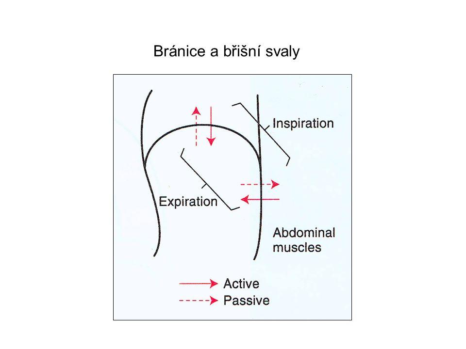 Perfect Lung Bránice a břišní svaly