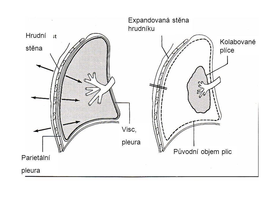 Hrudní stěna Parietální pleura Visc, pleura Původní objem plic Expandovaná stěna hrudníku Kolabované plíce