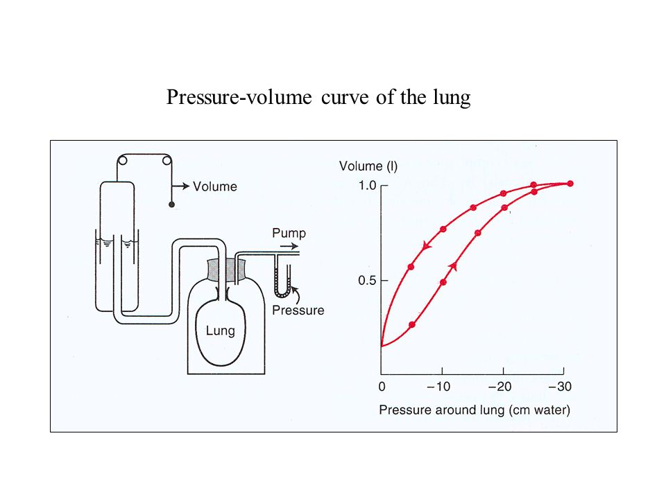 Perfect Lung Pressure-volume curve of the lung