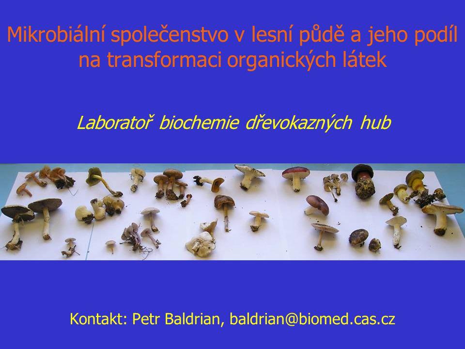 Mikrobiální společenstvo v lesní půdě a jeho podíl na transformaci organických látek Kontakt: Petr Baldrian, baldrian@biomed.cas.cz Laboratoř biochemi