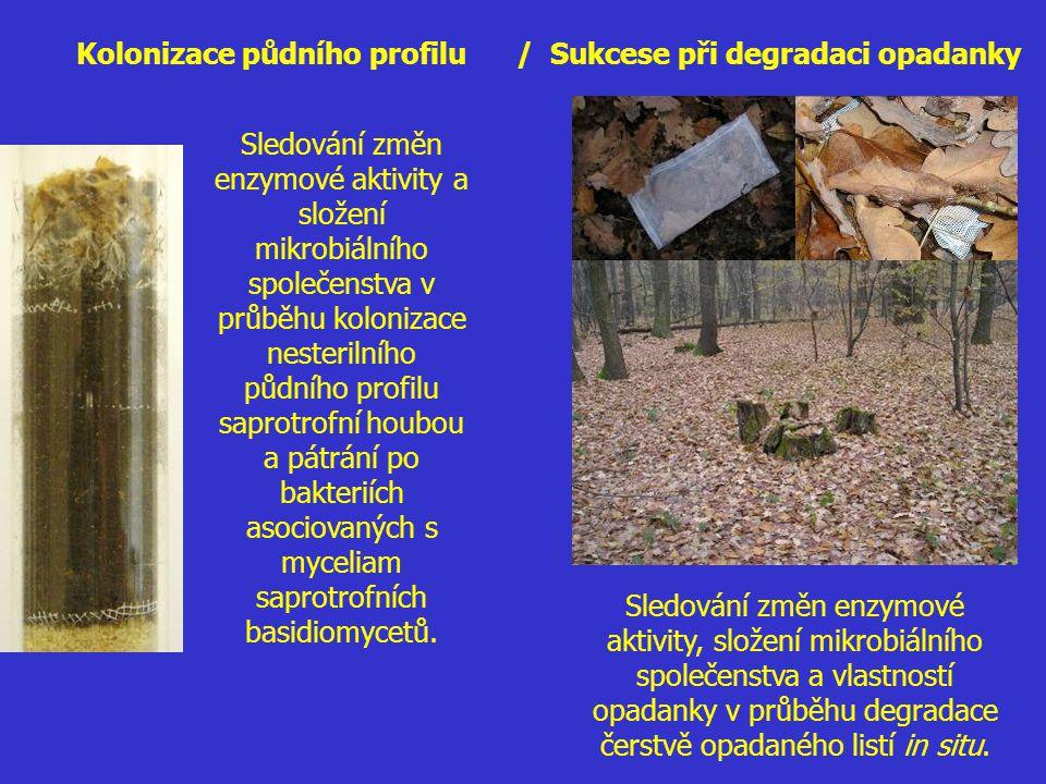 Kolonizace půdního profilu / Sukcese při degradaci opadanky Sledování změn enzymové aktivity, složení mikrobiálního společenstva a vlastností opadanky