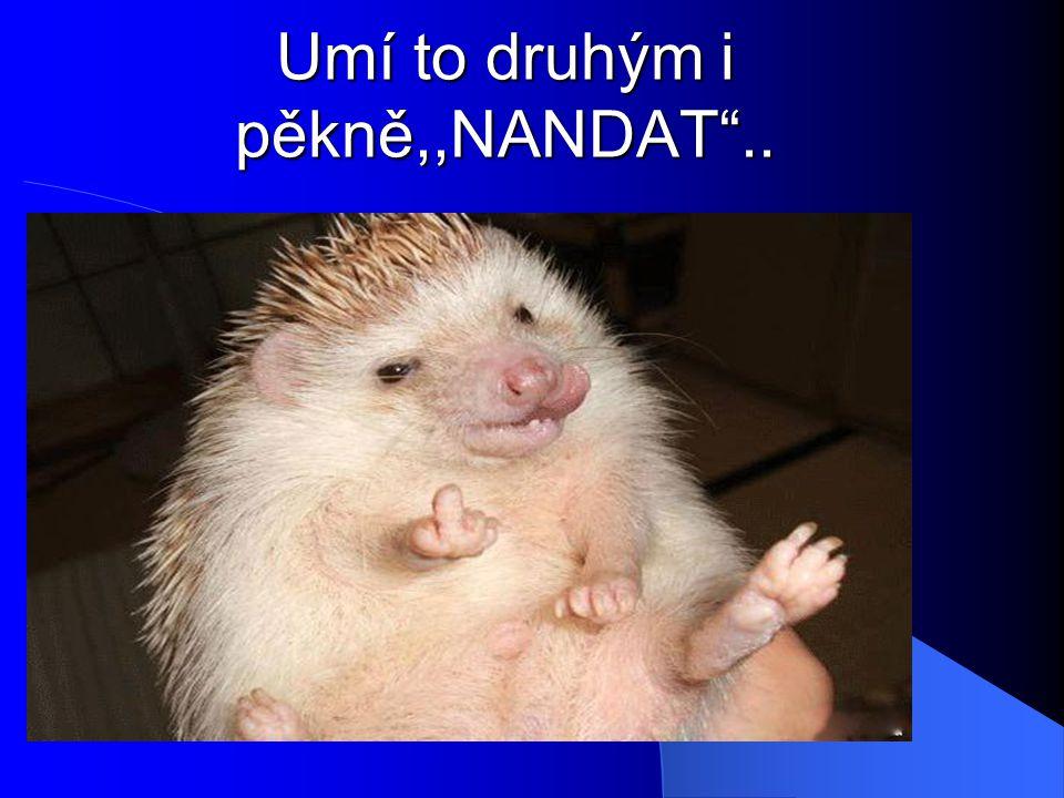 Umí to druhým i pěkně,,NANDAT ..