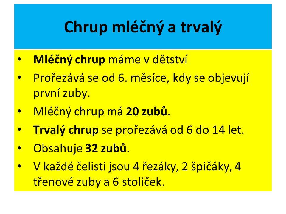 Chrup mléčný a trvalý Mléčný chrup máme v dětství Prořezává se od 6.