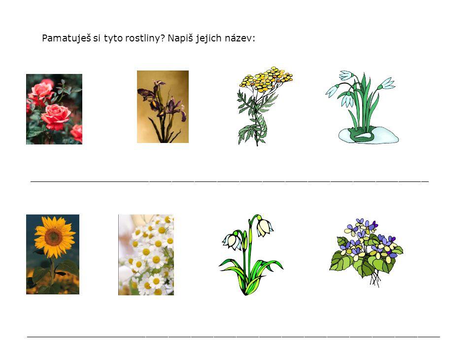 Pamatuješ si tyto rostliny? Napiš jejich název: _____________________________________________________ ________________________________________________
