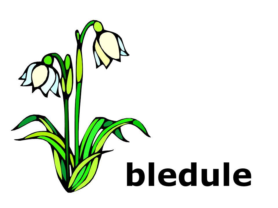 bledule