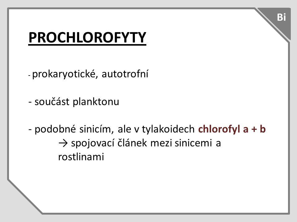 PROCHLOROFYTY - prokaryotické, autotrofní - součást planktonu - podobné sinicím, ale v tylakoidech chlorofyl a + b → spojovací článek mezi sinicemi a rostlinami Bi