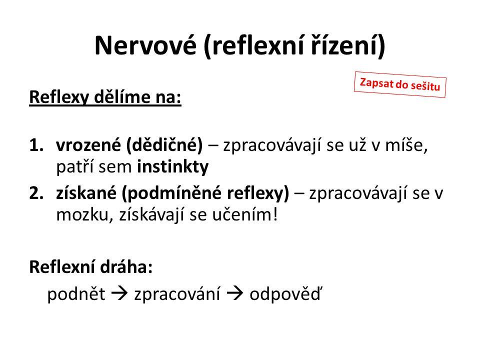 Nervové (reflexní řízení) Reflexy dělíme na: 1.vrozené (dědičné) – zpracovávají se už v míše, patří sem instinkty 2.získané (podmíněné reflexy) – zpra