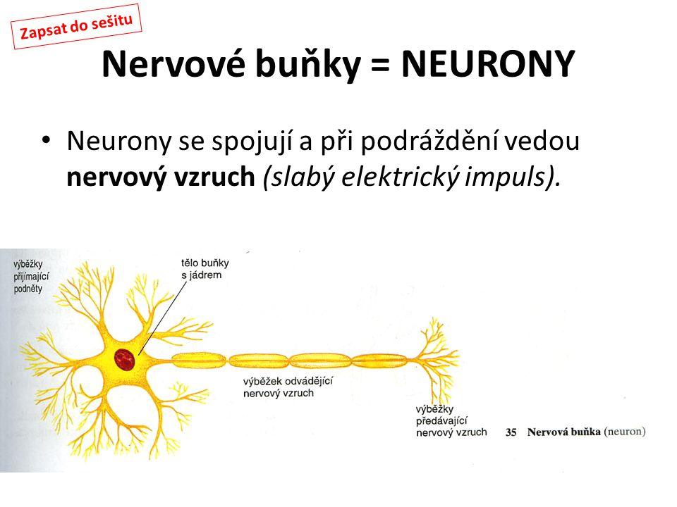 Nervové buňky = NEURONY Neurony se spojují a při podráždění vedou nervový vzruch (slabý elektrický impuls). Zapsat do sešitu