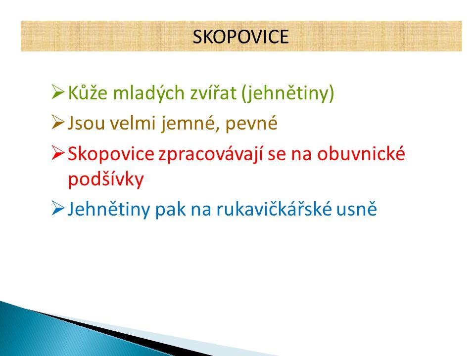 SKOPOVICE  Kůže mladých zvířat (jehnětiny)  Jsou velmi jemné, pevné  Skopovice zpracovávají se na obuvnické podšívky  Jehnětiny pak na rukavičkářs