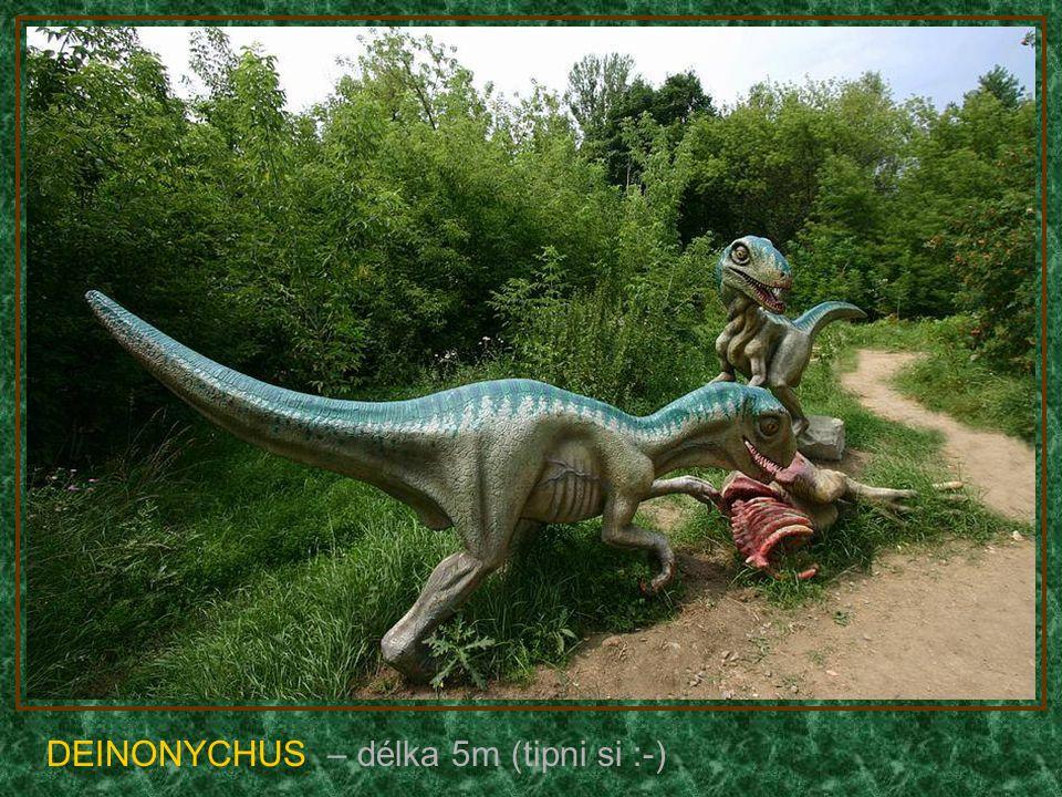 PACHYCEFALOSAURUS – délka 6m (býložravec)