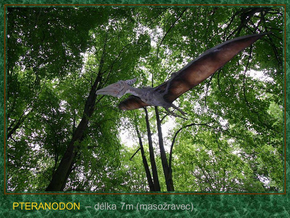 BRACHIOSAURUS - mládě – délka 30m (býložravec)
