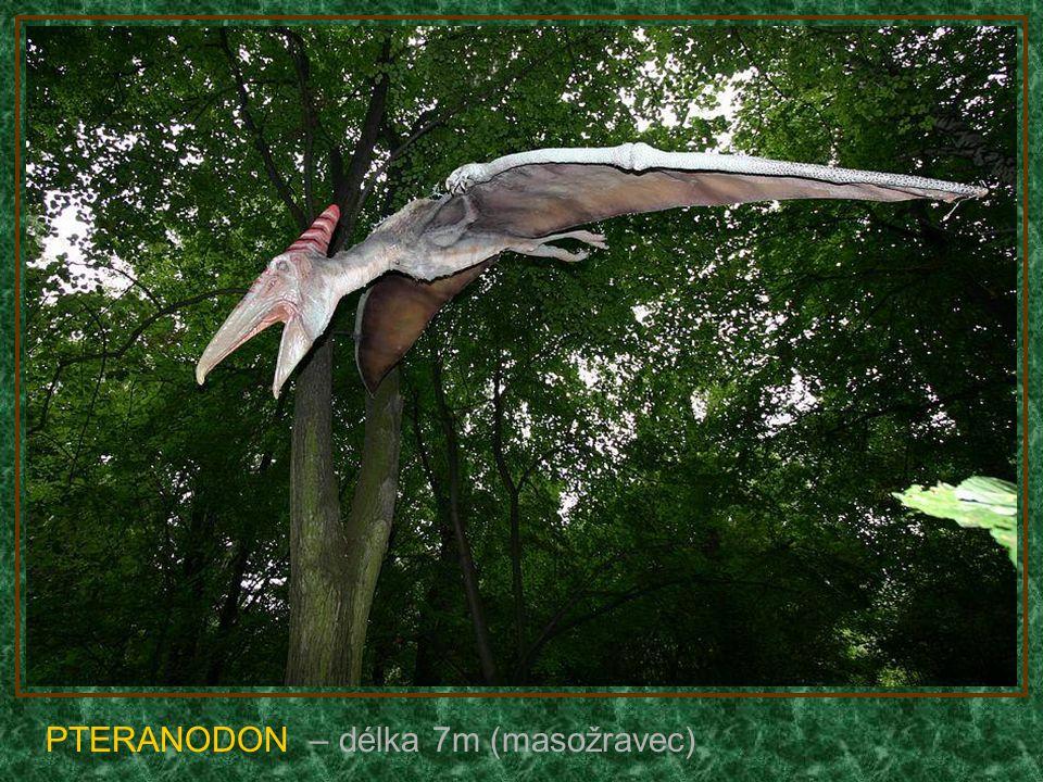 TROODON – délka 8m (hádej :-)