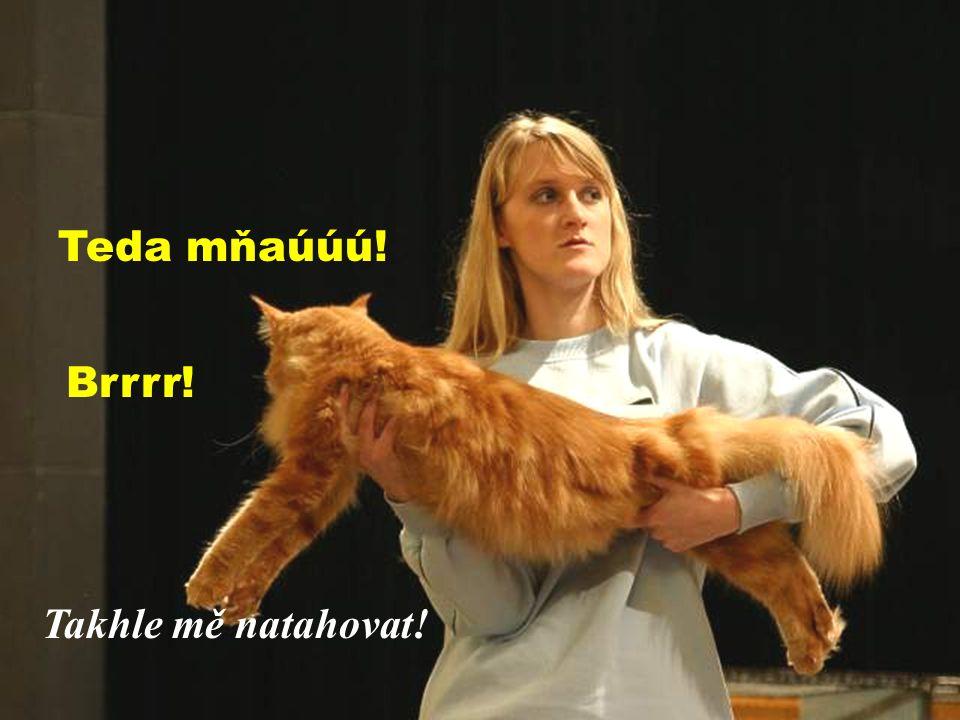 AÁ jdeme na věc Seď a neutíkej! Mezinárodní výstava koček - Prostějov 12/2004