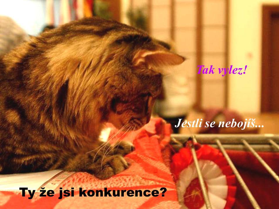 Jsem kočka! Hledím, co?