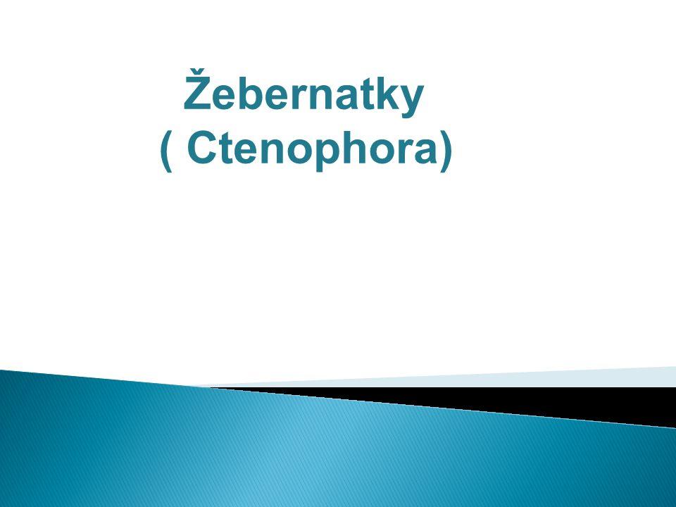 Žebernatky ( Ctenophora)