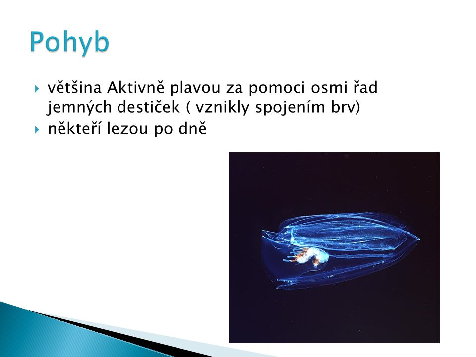 Tykadlovky  jeden pár zatažitelných, někdy velice dlouhých tykadel s lepivými buňkami zástupci:  hruškovka obecná  žebernatka tykadlová Beztykadlovky  beztykadlovka vejčitá