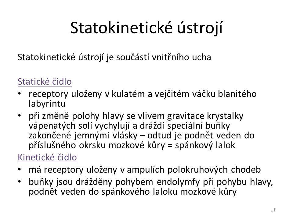 Statokinetické ústrojí Statokinetické ústrojí je součástí vnitřního ucha Statické čidlo receptory uloženy v kulatém a vejčitém váčku blanitého labyrin
