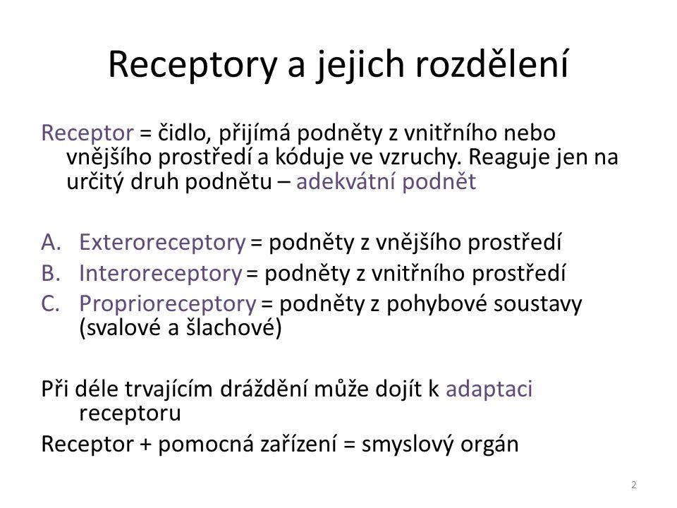 Receptory a jejich rozdělení Receptor = čidlo, přijímá podněty z vnitřního nebo vnějšího prostředí a kóduje ve vzruchy. Reaguje jen na určitý druh pod