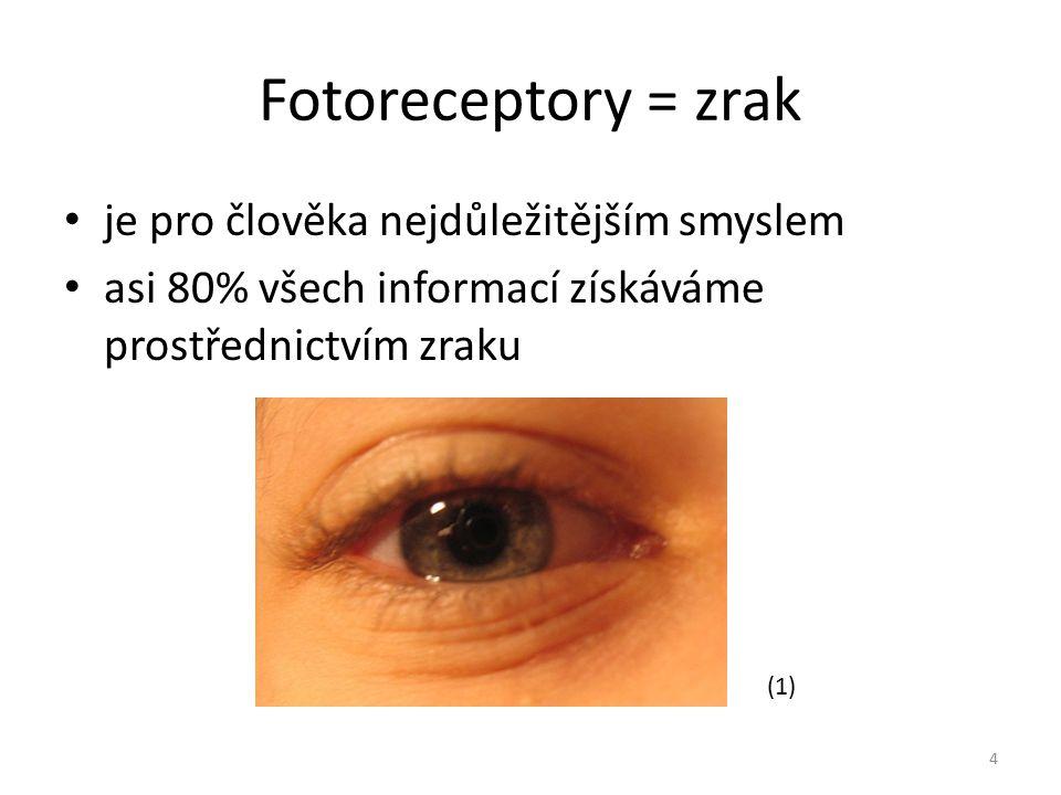 Fotoreceptory = zrak je pro člověka nejdůležitějším smyslem asi 80% všech informací získáváme prostřednictvím zraku 4 (1)