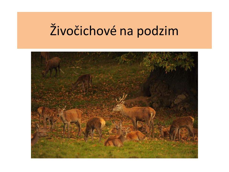 Živočichové na podzim