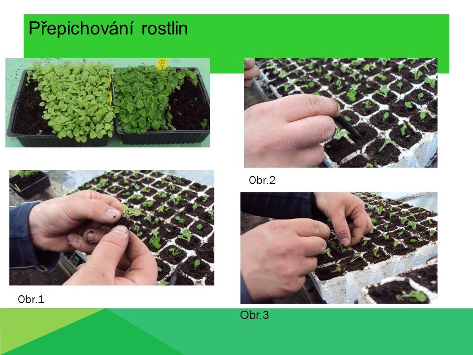 Přepichování rostlin Obr.1 Obr.2 Obr.3