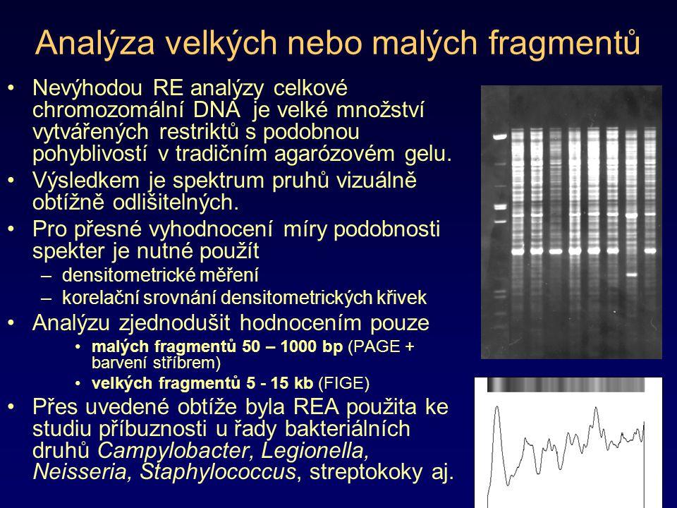 Analýza velkých nebo malých fragmentů Nevýhodou RE analýzy celkové chromozomální DNA je velké množství vytvářených restriktů s podobnou pohyblivostí v