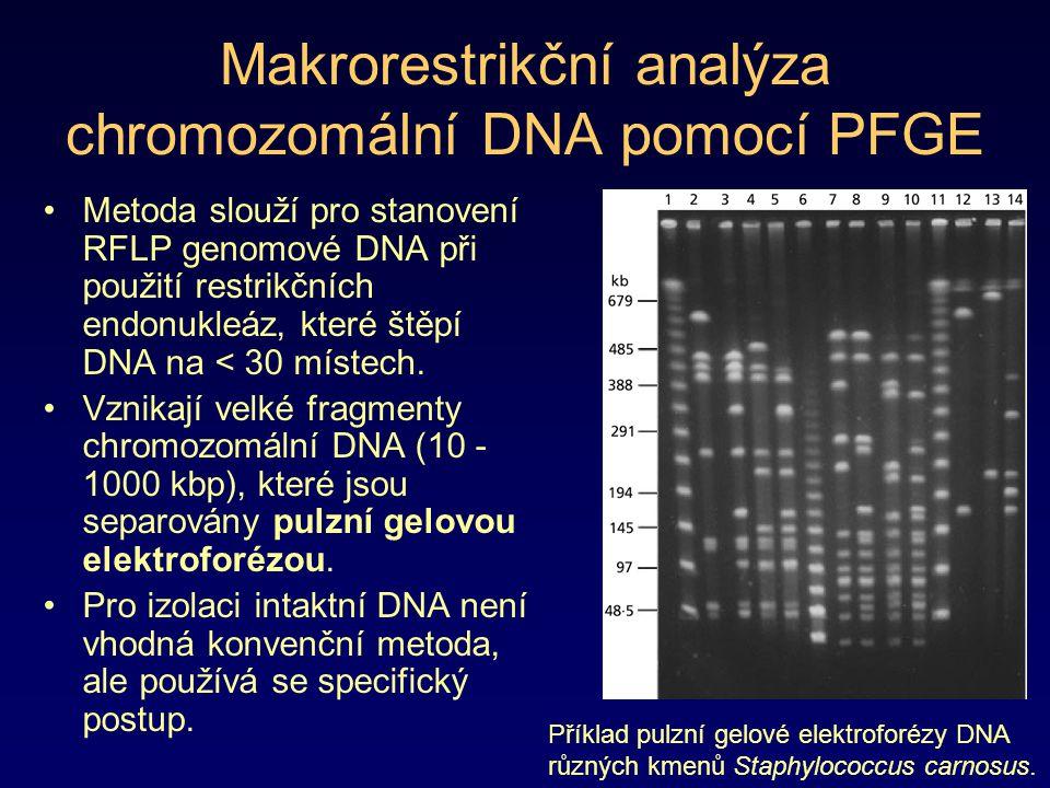 Makrorestrikční analýza chromozomální DNA pomocí PFGE Metoda slouží pro stanovení RFLP genomové DNA při použití restrikčních endonukleáz, které štěpí