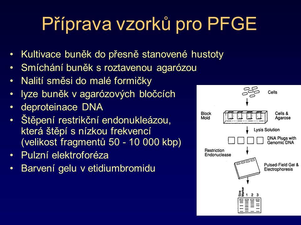 Příprava vzorků pro PFGE Kultivace buněk do přesně stanovené hustoty Smíchání buněk s roztavenou agarózou Nalití směsi do malé formičky lyze buněk v a
