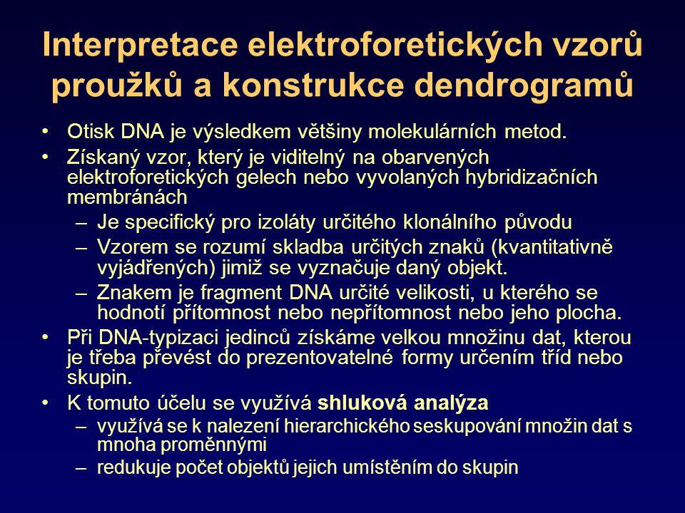 Interpretace elektroforetických vzorů proužků a konstrukce dendrogramů Otisk DNA je výsledkem většiny molekulárních metod. Získaný vzor, který je vidi