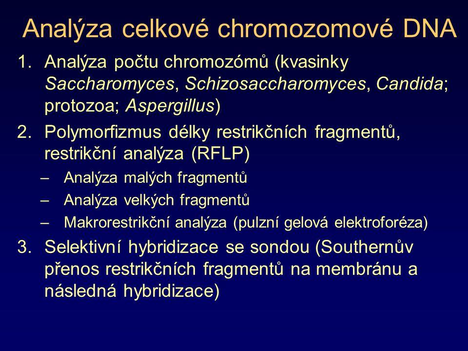 Analýza celkové chromozomové DNA 1.Analýza počtu chromozómů (kvasinky Saccharomyces, Schizosaccharomyces, Candida; protozoa; Aspergillus) 2.Polymorfiz