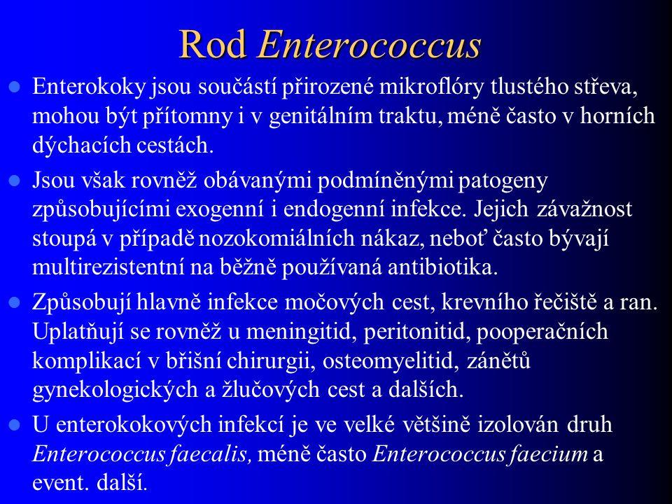 Rod Enterococcus Enterokoky jsou součástí přirozené mikroflóry tlustého střeva, mohou být přítomny i v genitálním traktu, méně často v horních dýchací